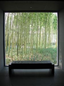 Bamboo through a window in the Suzhou Chinese Garden's Museum - photographed  by Noa & Amir.
