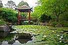 """ Fagan Park Chinese Garden,"" by artist George Petrovsky - open LINKAGE for larger view."