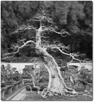 A black & white image showing up the above penjing, as a ' praiseworthy ' one.