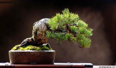 An imitation of what a penjing artisan may have seen in natural landscapes.