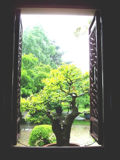 Penjing located and wonderfully positioned, outside a pavilion window.