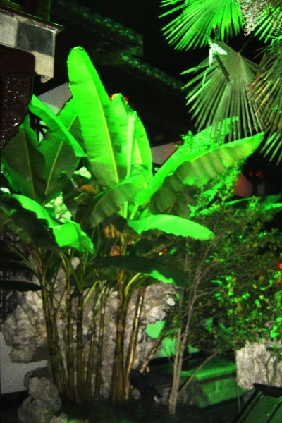 How graceful these banana leaves appear in the He Yuan, of Yangzhou, by night.