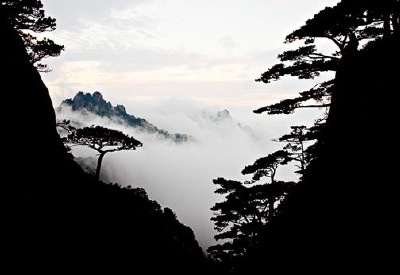 Mountain scene in China, showing the striking silhouette of the pines, that dedicate themselves to the mountain sides.