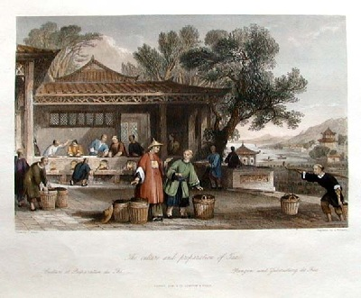 Cultural preparation of Chinese tea.