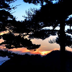 Pine strength & stability of Mt. Huangshan