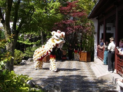 Lion Dance, being performed in a courtyard at the Dr. Sun Yat-Sen Classical Chinese Garden, Vancouver, BC.