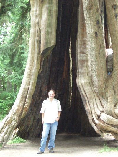An image of an ' unlikely & unknown ' scholar, beneath a hollowed out tree, in Stanely Park, Vancouver, BC.