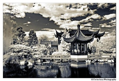 Fall in Portland's Chinese Garden of Awakening Orchids - professionally taken by photographer Evrim Icoz @ a wedding in the garden.