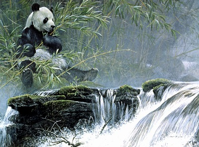 A painting of the Giant Panda, by Robert Bateman.