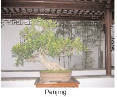 Penjing in a Chinese Garden