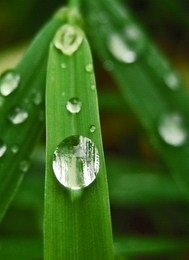 Rain drops on garden leaves.